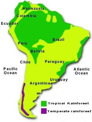 Temperate Rainforest World Map.Amazon Rainforest Map
