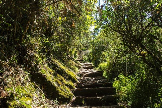 Stone steps along the Inca Trail to Machu Picchu, Peru